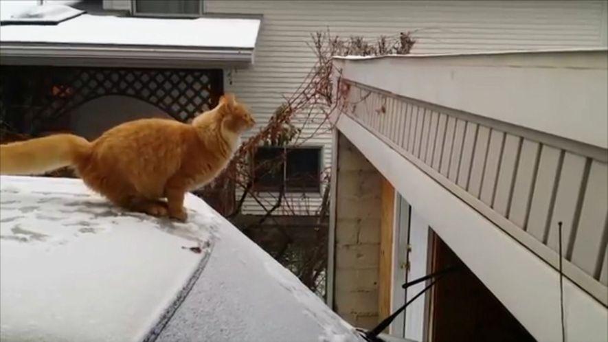 Falhas de Gatos