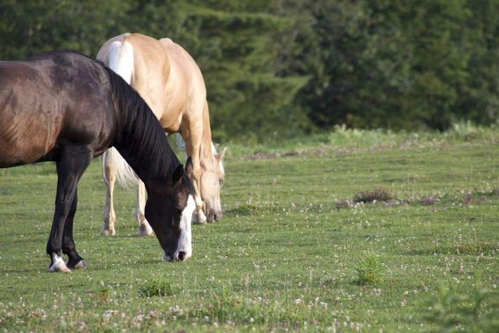 Cavalos com crianças