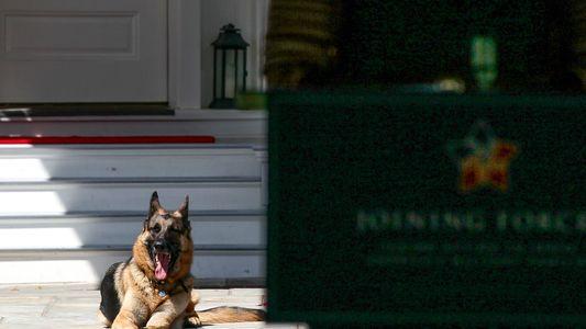 Primeiro Cão Adotado em Abrigo a Viver na Casa Branca Reflete Tendência de Adoção de Animais ...