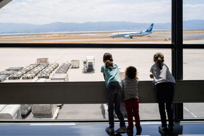 Pequenos viajantes preparam-se para levantar voo.