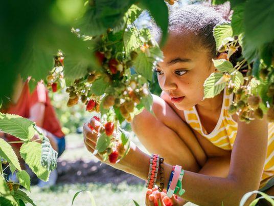 Colher alimentos pode aproximar as crianças da natureza