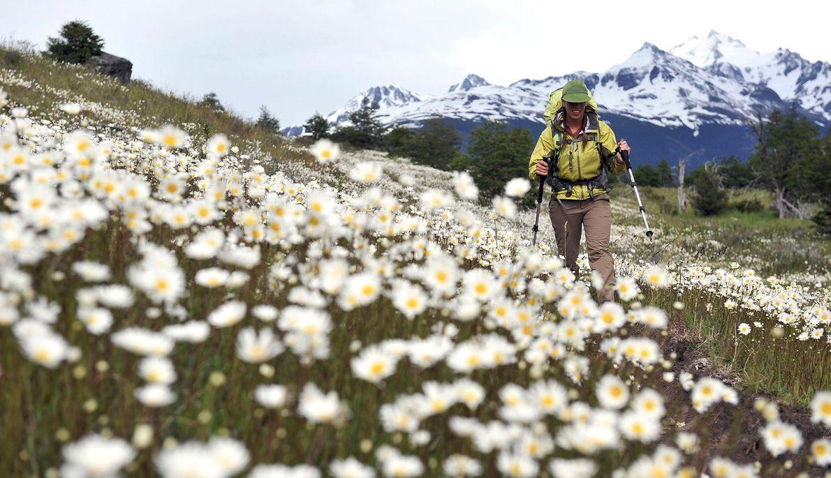 Mulher com mochila às costas atravessa campo de margaridas