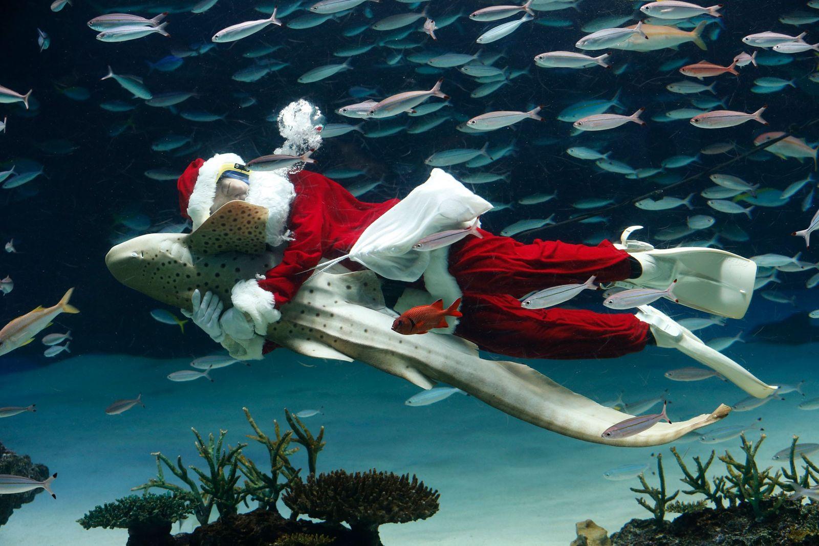 Celebrações de Natal Pelo Mundo Inteiro