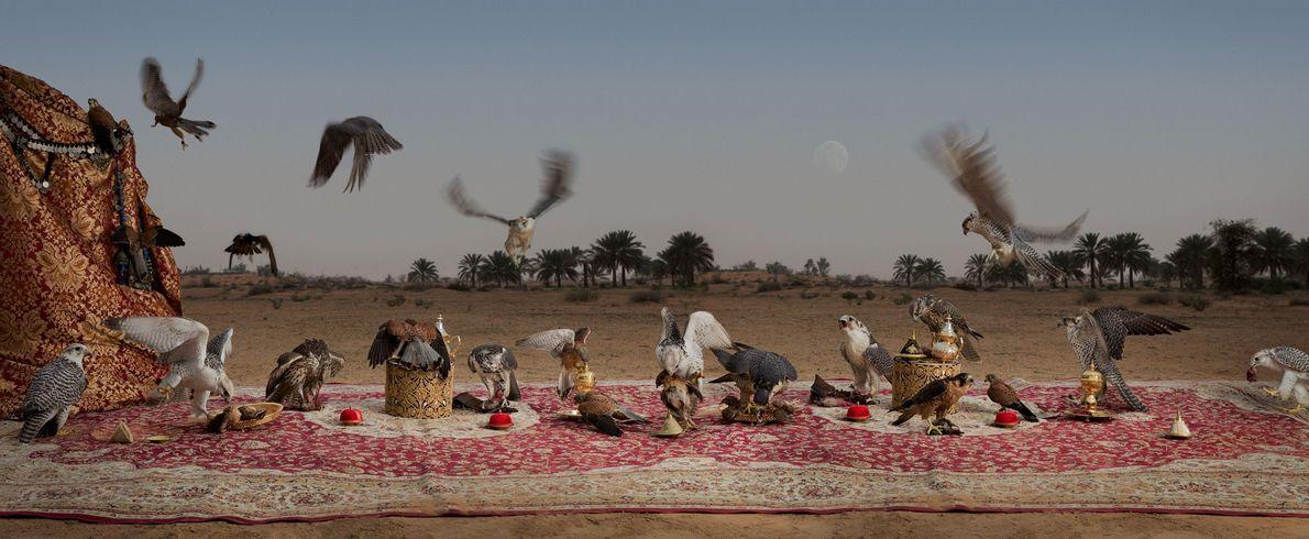 O banquete dos falcões. Dubai, Emirados Árabes Unidos, 2016.