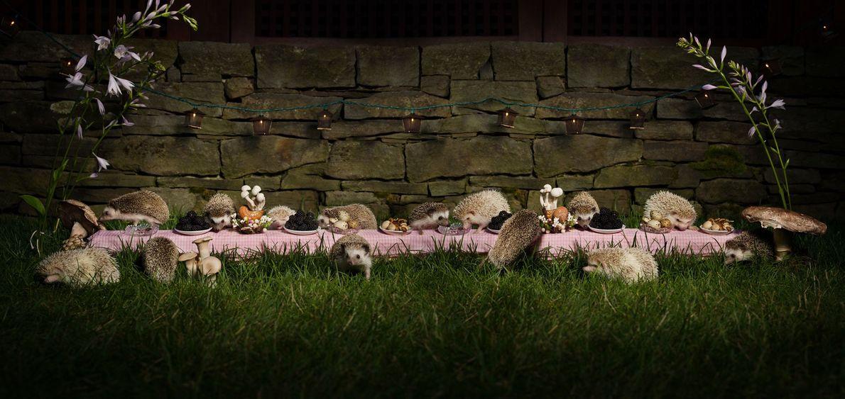 The Hedgehog Feast. Montclair, New Jersey, 2013.