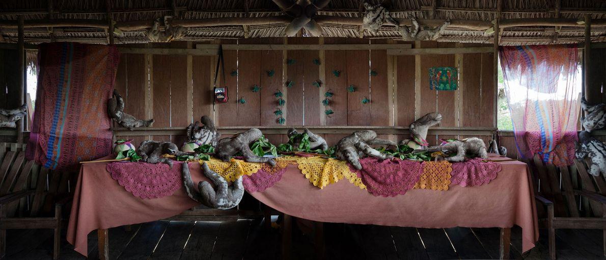 The Three-Toed Sloth Feast. Amazónia, Peru, 2014.