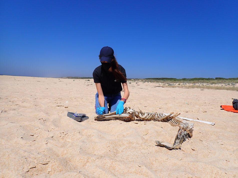 Universidade de Évora estuda animais arrojados na costa alentejana