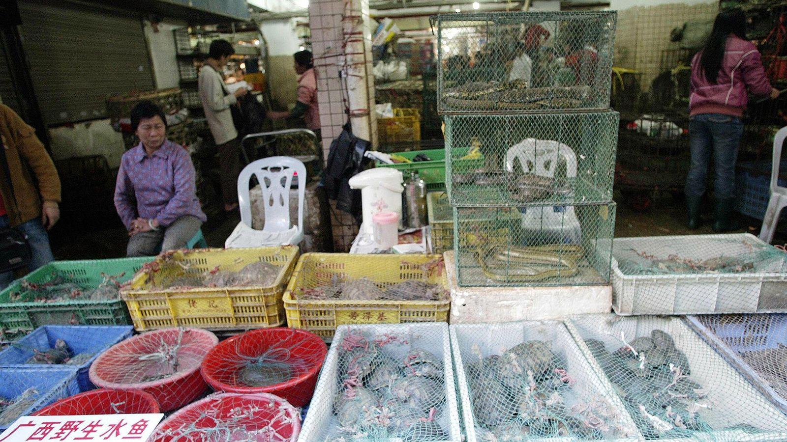 Num mercado de vida selvagem em Shenzhen, os vendedores exibem répteis e mamíferos vivos. Na China, ...