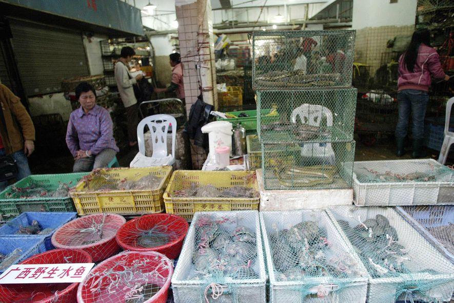 Coronavírus: Pressão Aumenta Para China Acabar com Mercados de Vida Selvagem