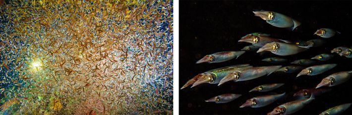 Esquerda: O mar noturno pulsa com vida invisível durante o dia. Vermes marinhos atraídos por uma ...