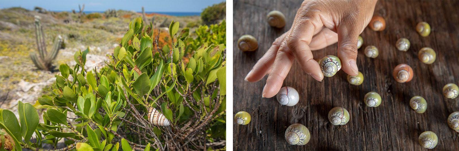 Esquerda: O fotógrafo Bruno D'Amicis e a bióloga Norvis Hernandez demoraram um dia inteiro para encontrar ...