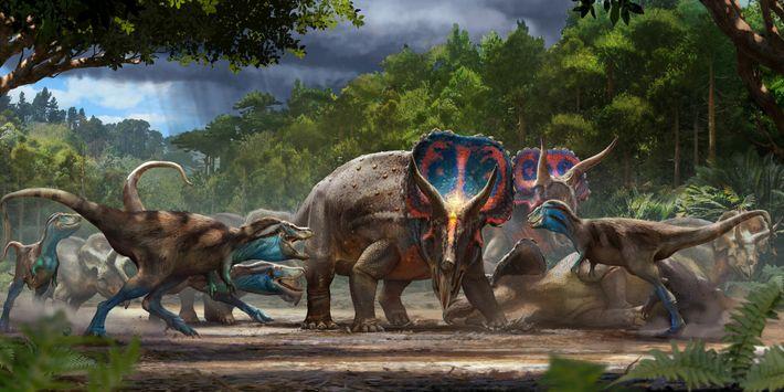 """O fóssil """"Dinossauros em Duelo"""" pode representar um combate mortal entre um Triceratops e um T. ..."""