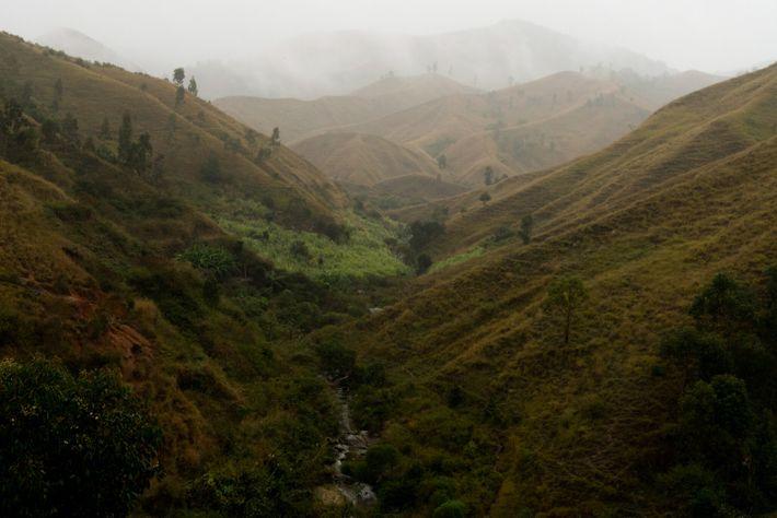 A desflorestação ameaça a biodiversidade espetacular da ilha, que é crucial para uma indústria de turismo ...