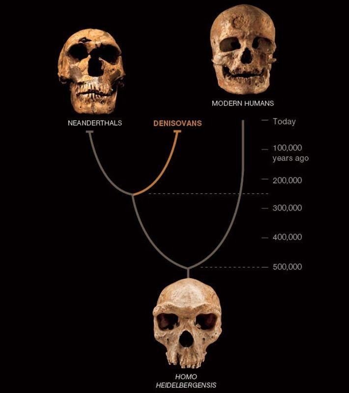 A ÁRVORE GENEALÓGICA