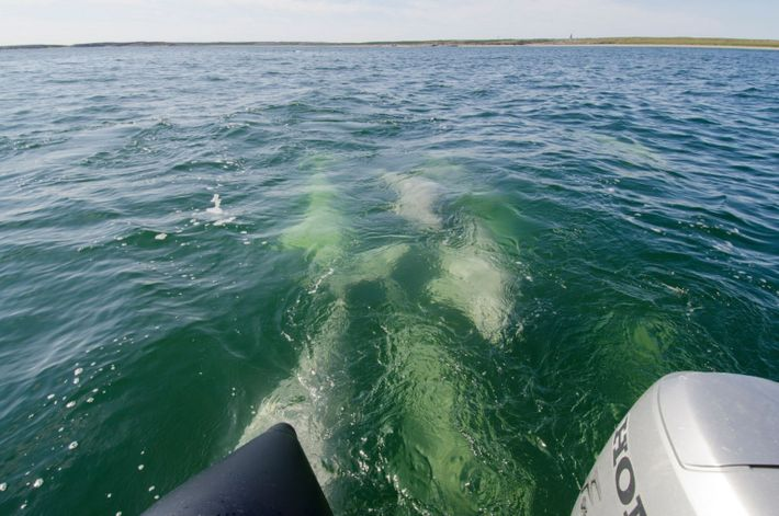 Encontro com baleias