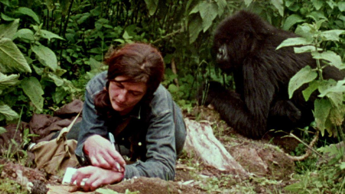 Veja: A Vida de Dian Fossey com os Gorilas Revelada em Raro Filme