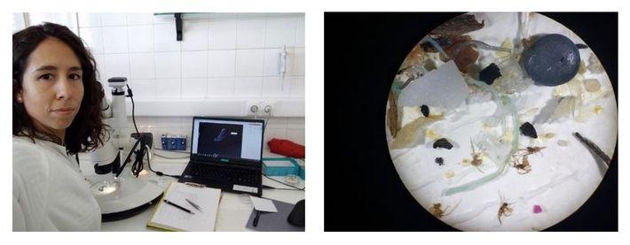 Esquerda: A fase de contagem e medição dos microplásticos requer inúmeras horas de trabalho à lupa ...