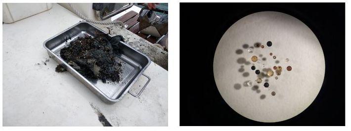 Esquerda: Amostra de sedimento recolhida no estuário do Sado com draga Petite Ponar. Direita: Microesferas extraídas ...