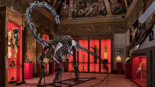 Um dinossauro (Kaatedocus siberi) entre uma mistura eclética de itens, no Theatrum Mundi, uma galeria em ...