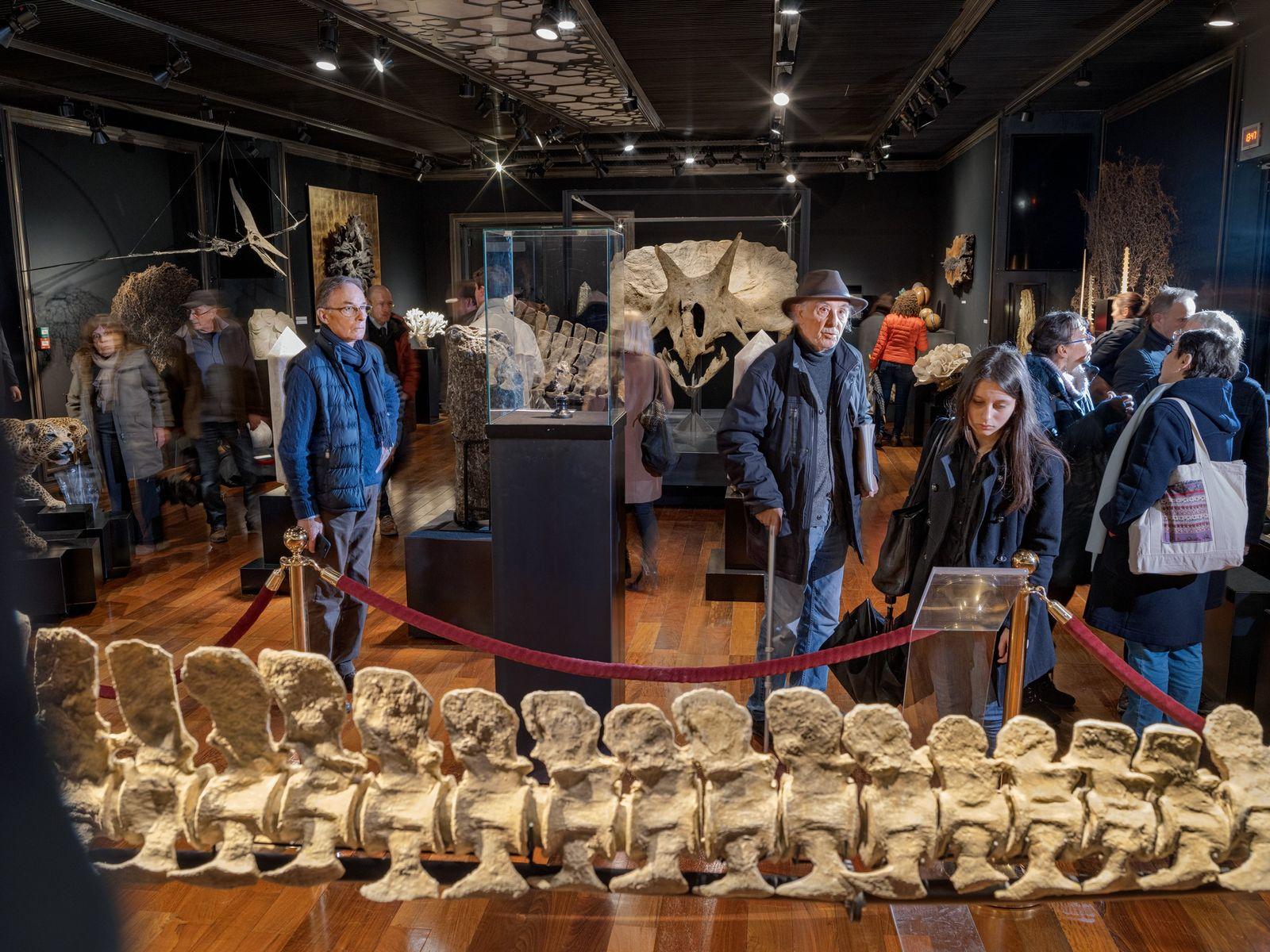 Um crânio de Triceratops (ao centro, em segundo plano) e outros fósseis atraem uma multidão até ...