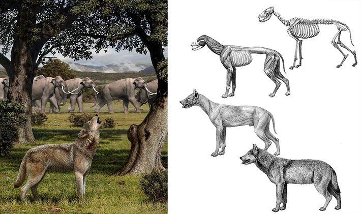 Lobos pré-históricos