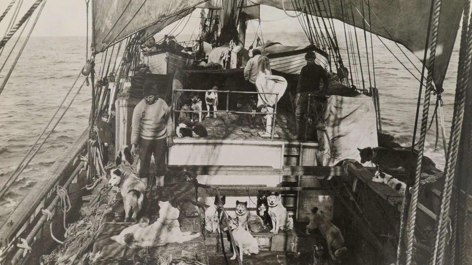 Para a sua viagem, a expedição trouxe cães de trenó, 3 trenós a motor, 162 carcaças ...