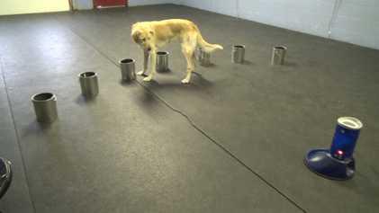 Veja Como Estes Cães Detetam Sinais de Ataques Epiléticos