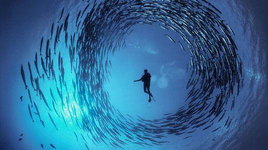 Conheça o Mestre Fotógrafo Numa Missão Para nos Ajudar a Ver o Mar