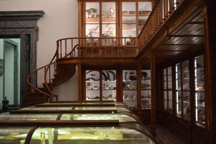 Galeria de História Natural