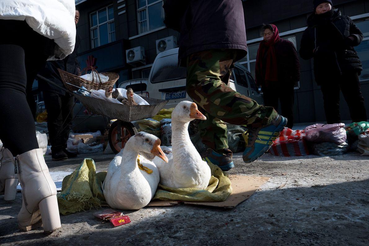 Patos em exposição num mercado de rua no condado autónomo coreano de Changbai