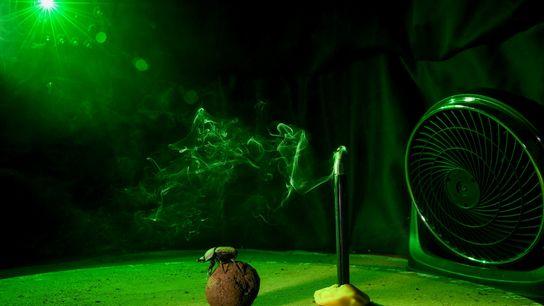 """No laboratório, um escaravelho pausa para reparar na direção do vento e na localização do """"sol"""" ..."""