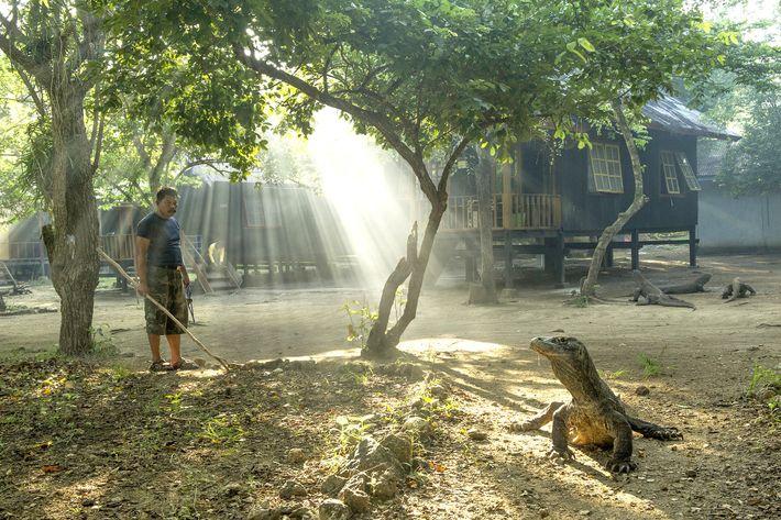 Um dragão-de-komodo desfruta do sol no Parque Nacional de Komodo. Estes répteis raros são ectotérmicos, o ...