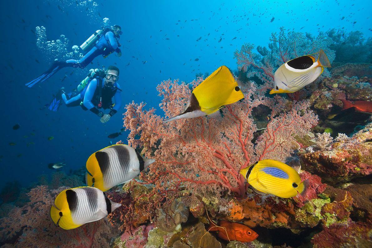 Dois mergulhadores exploram a Grande Barreira de Coral, localizada no Oceano Pacífico Sul.