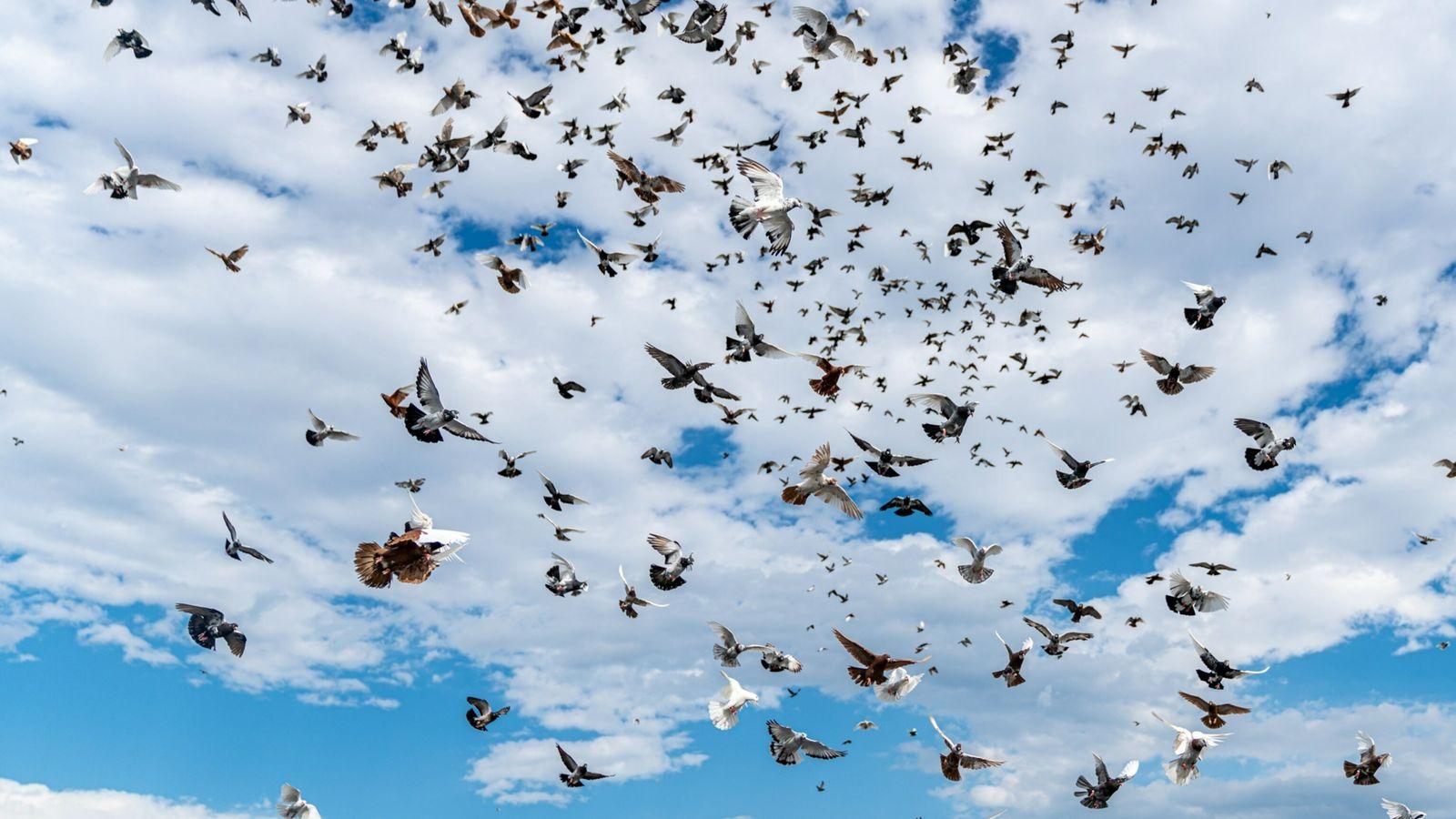 população de pássaros