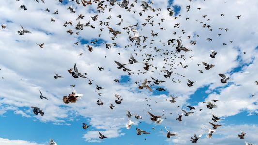 Quantos pássaros existem no mundo?