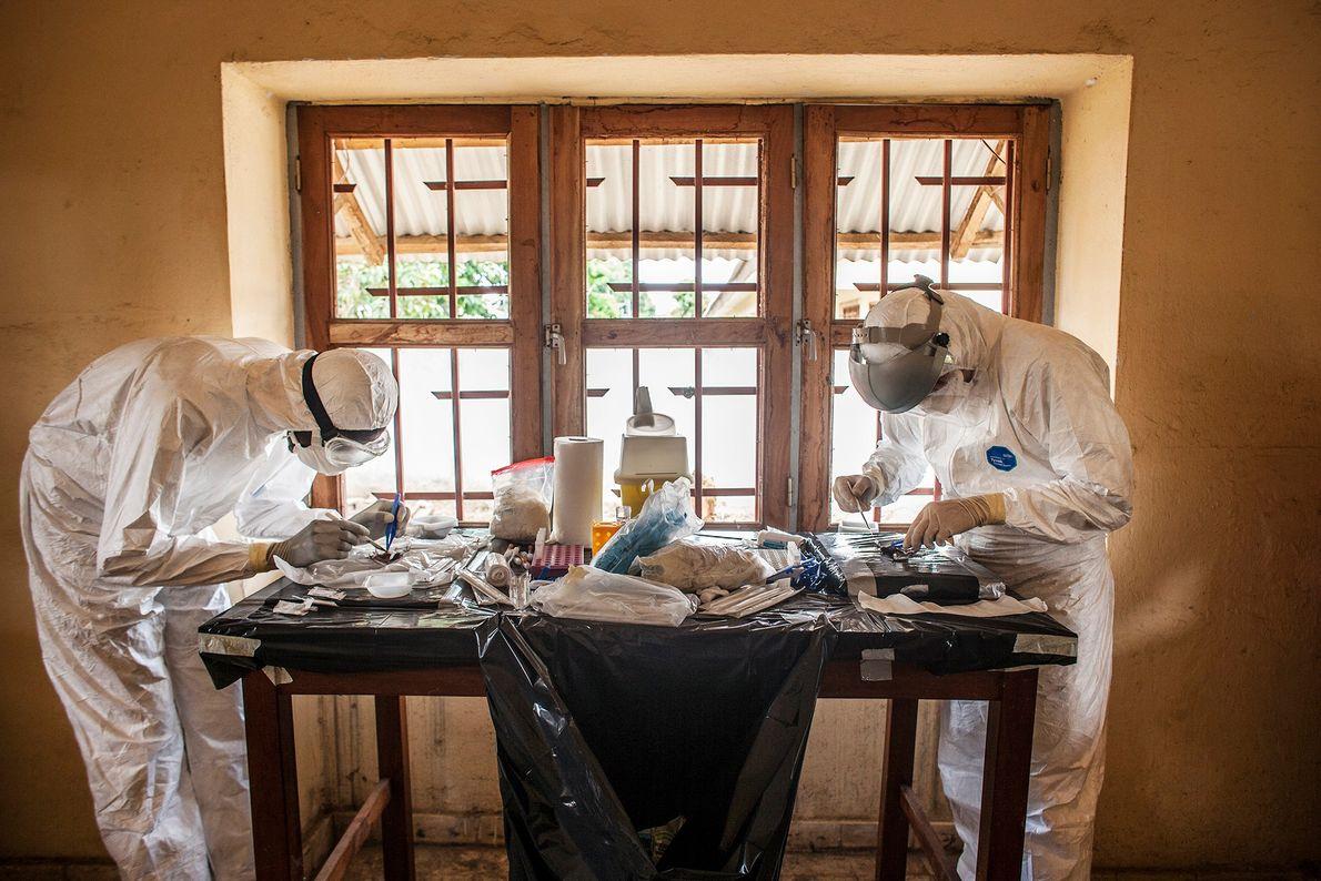 Dois médicos a necropsiar morcegos num laboratório improvisado.