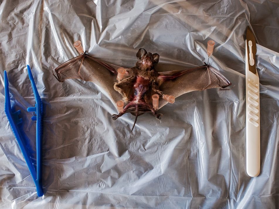 Vírus Ébola: O Que É? Pode Ser Travado?