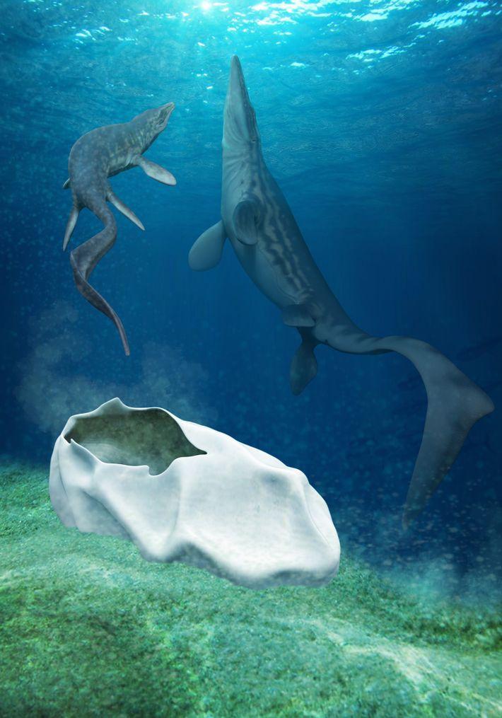 Esta ilustração mostra a hipótese do Antarcticoolithuster sidocolocado por um mosassauro, um tipo de réptil marinho ...