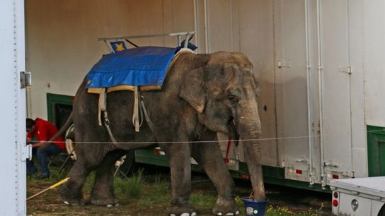 elefante Minnie