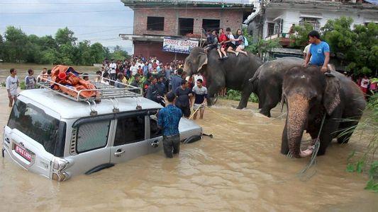 Elefantes Salvam Centenas de Pessoas das Cheias