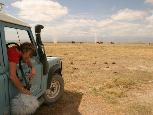 O que estão realmente os elefantes a 'dizer'? Trabalho inédito revela mistérios de comunicação.