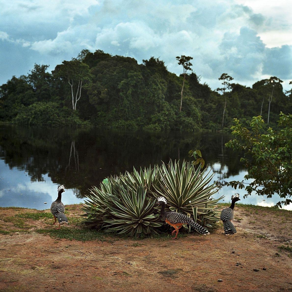 Rio Novo, um posto avançado da Reserva Extrativista do Rio Iriri