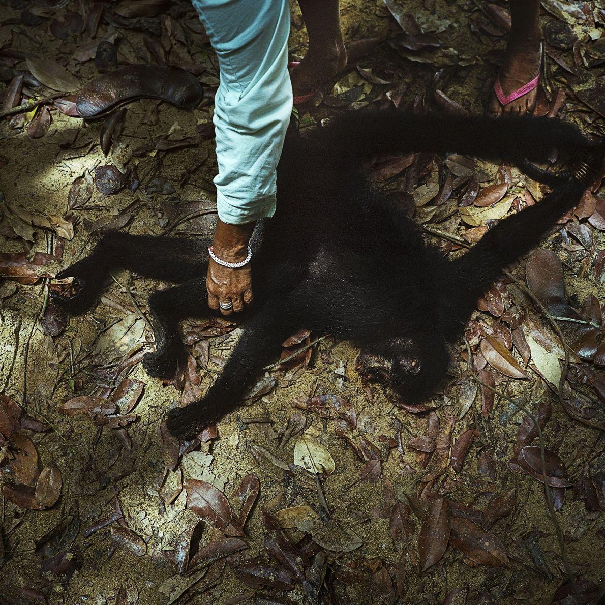 Um macaco-aranha é caçado pelos habitantes Munduruku da aldeia Sawre Muybu