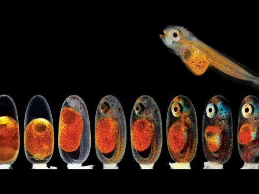 Deleite-se com pequenas maravilhas vistas ao microscópio