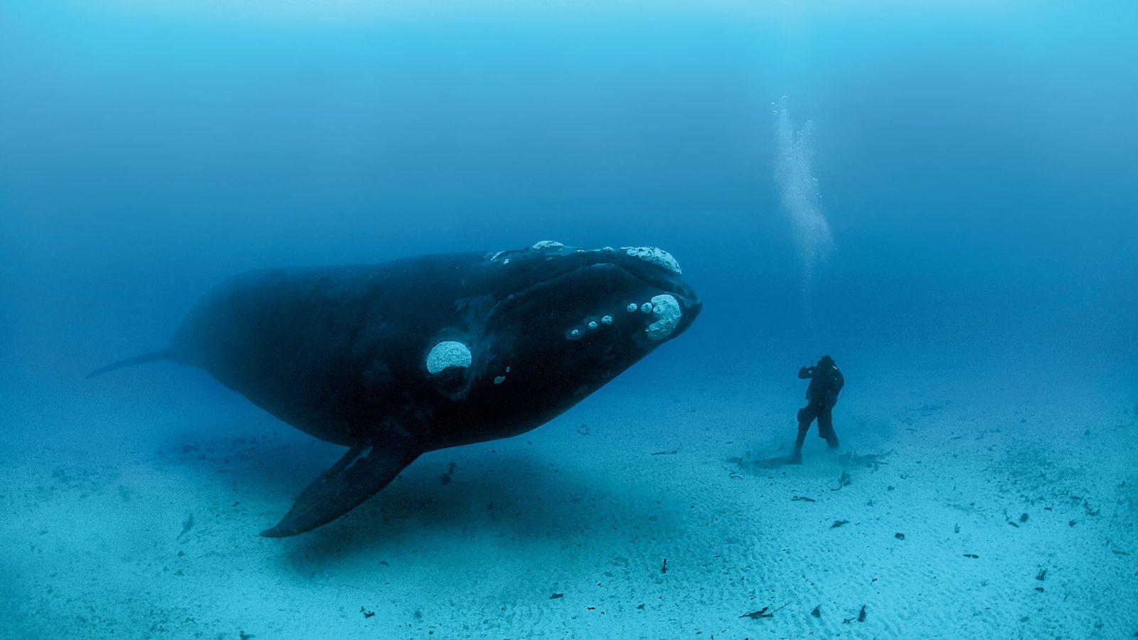 baleia mergulhador