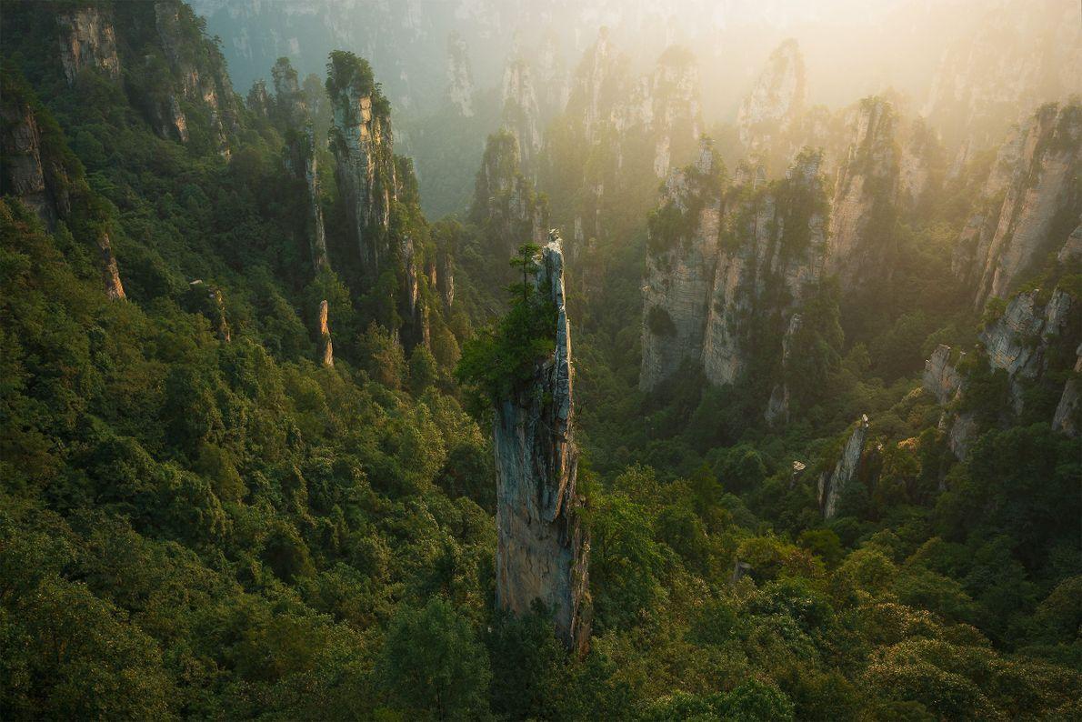 Torres Florestais