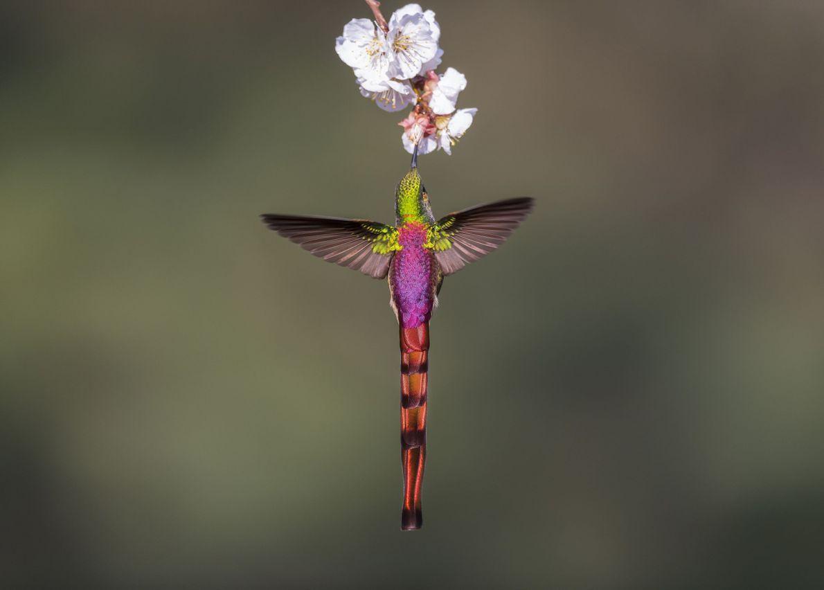 Um pássaro Deslumbrante