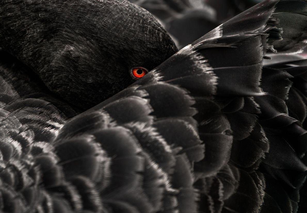 Um Olhar Atento