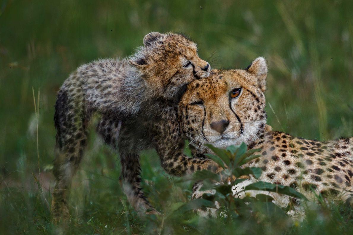 Uma Mãe e a sua Cria