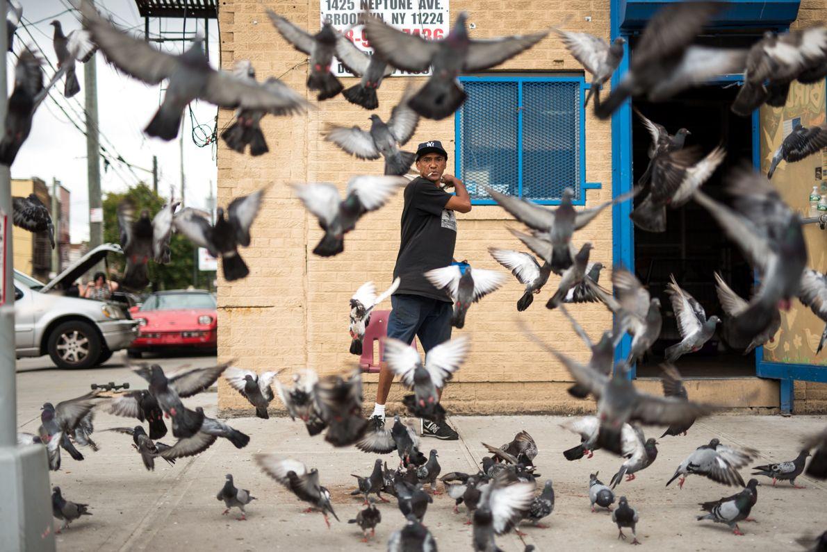 Para os Pássaros
